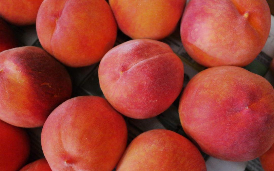Peach Florida Prince